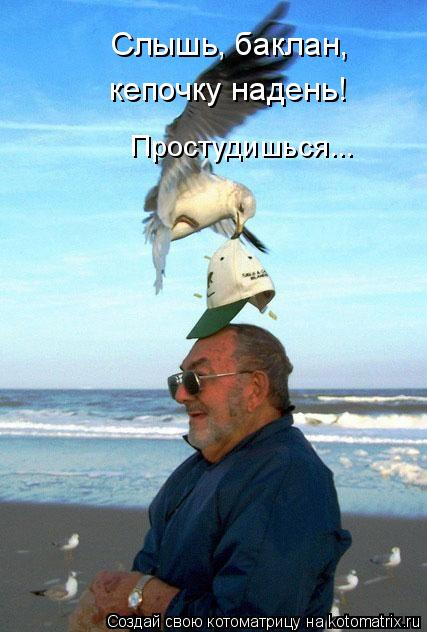 kotomatritsa_j (427x632, 202Kb)