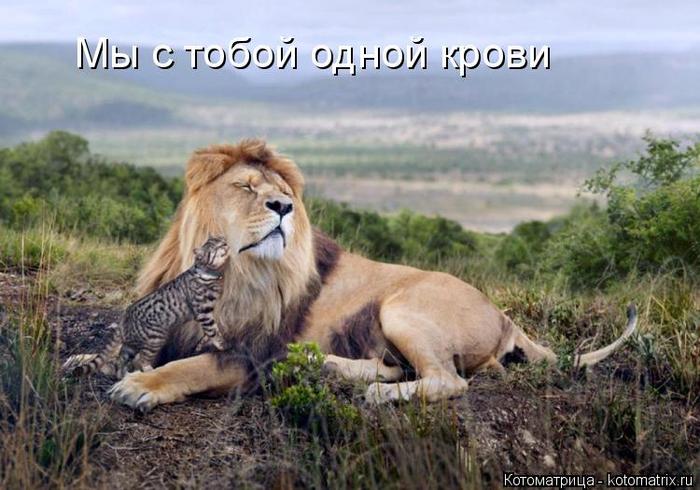 kotomatritsa_qu (700x490, 348Kb)