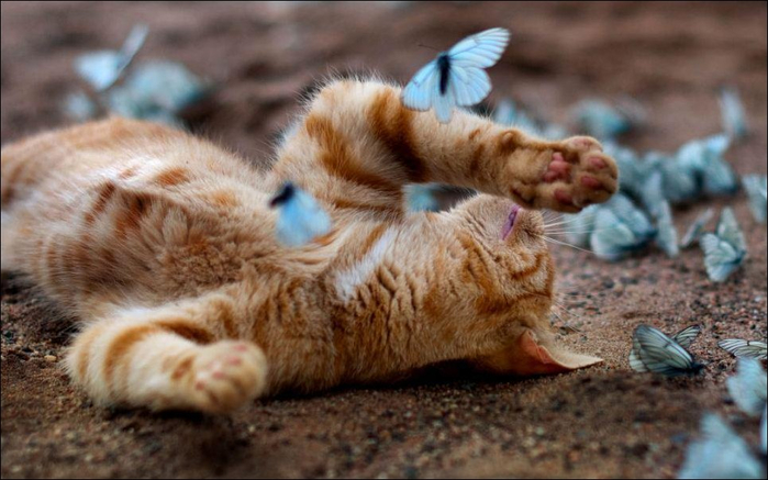 butterfly_cats_07 (700x437, 310Kb)