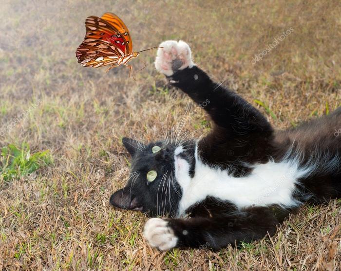 depositphotos_8003468-stock-photo-black-and-white-kitty-cat (700x557, 479Kb)