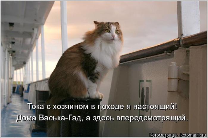kotomatritsa_G (700x466, 239Kb)