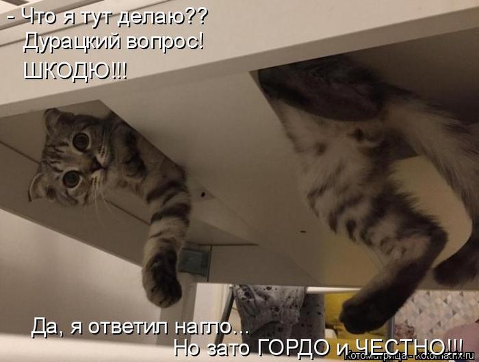 kotomatritsa_K (700x529, 248Kb)