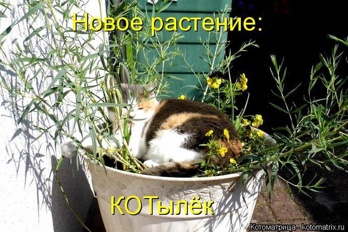 kotomatritsa_p (1) (700x466, 423Kb)