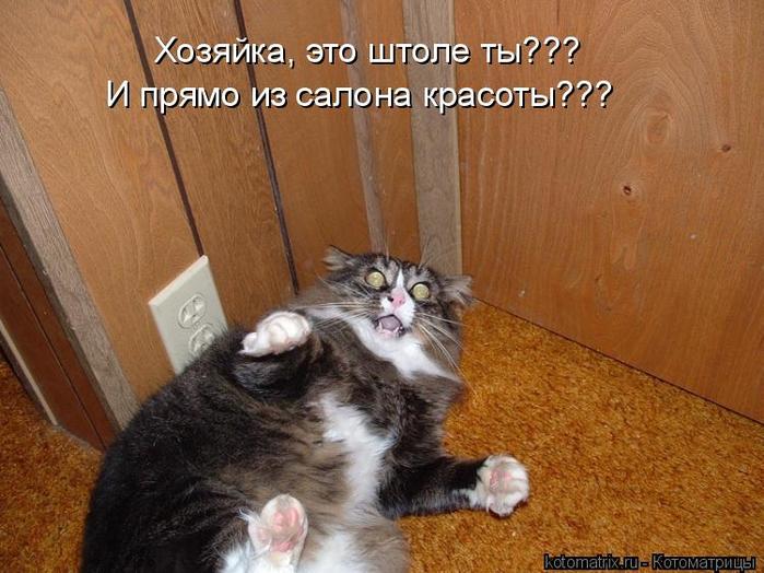 kotomatritsa_RI (700x524, 381Kb)