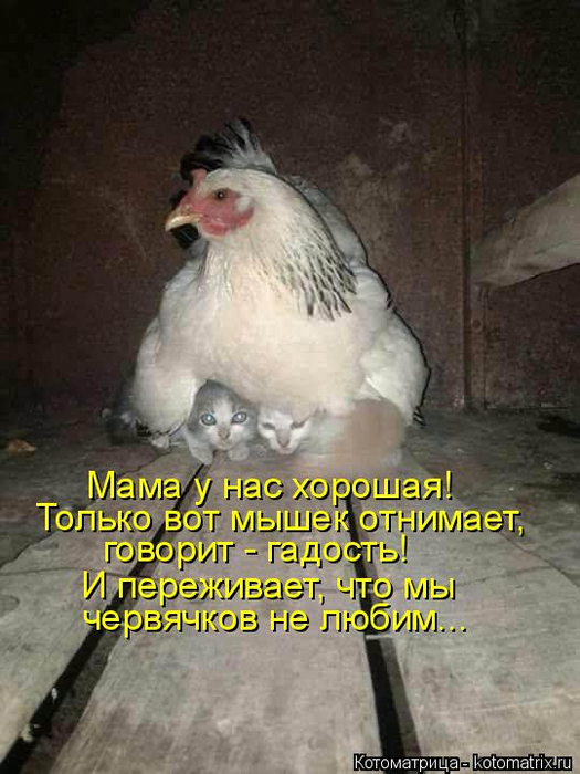 kotomatritsa_v (525x700, 305Kb)