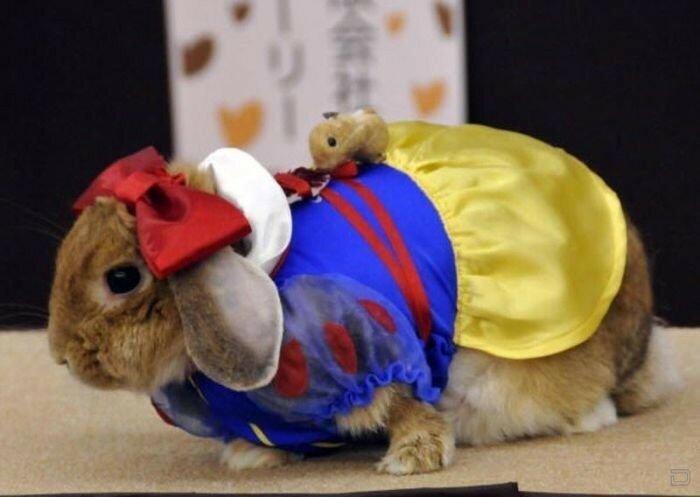 Модный конкурс среди кроликов