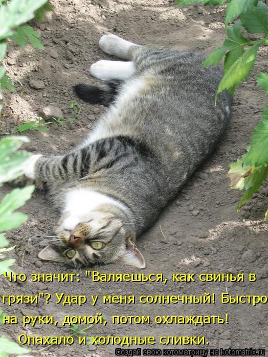 kotomatritsa_S (524x700, 437Kb)