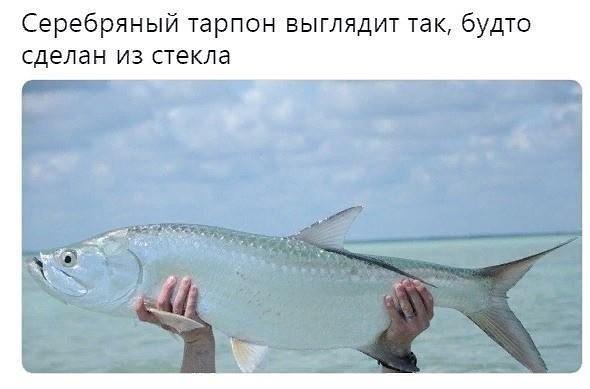 _zKCigInlKY (590x389, 99Kb)