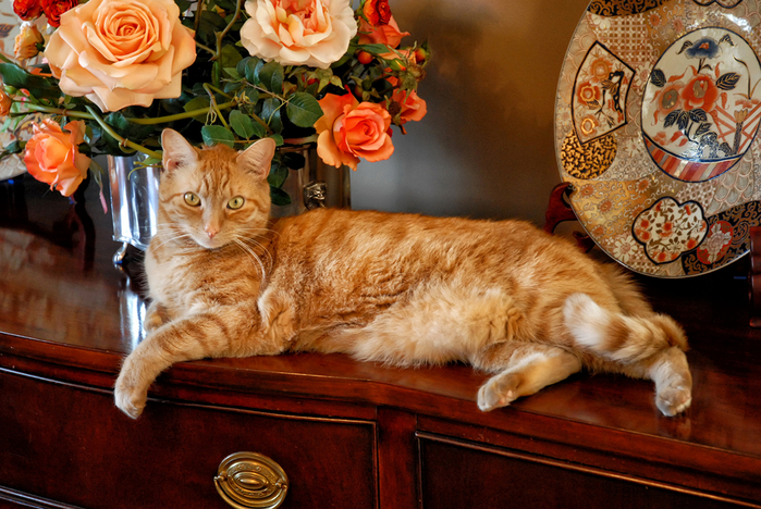 Cats_Roses_Ginger_color_418811 (700x468, 495Kb)