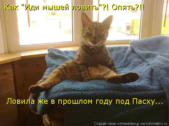 kotomatritsa_a6 (700x525, 395Kb)