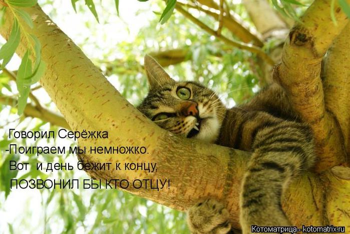 kotomatritsa_D (700x467, 398Kb)
