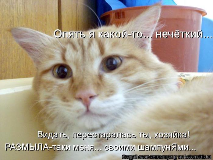 kotomatritsa_G (1) (700x524, 341Kb)