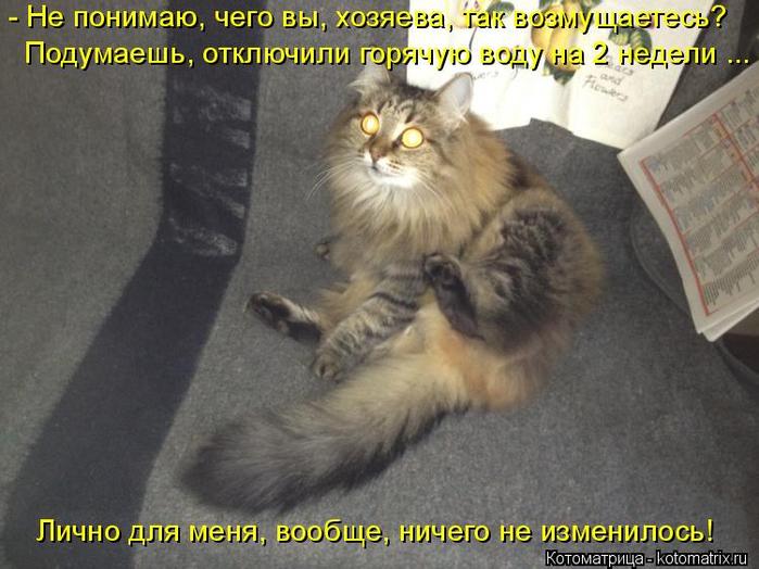 kotomatritsa_QX (700x524, 339Kb)