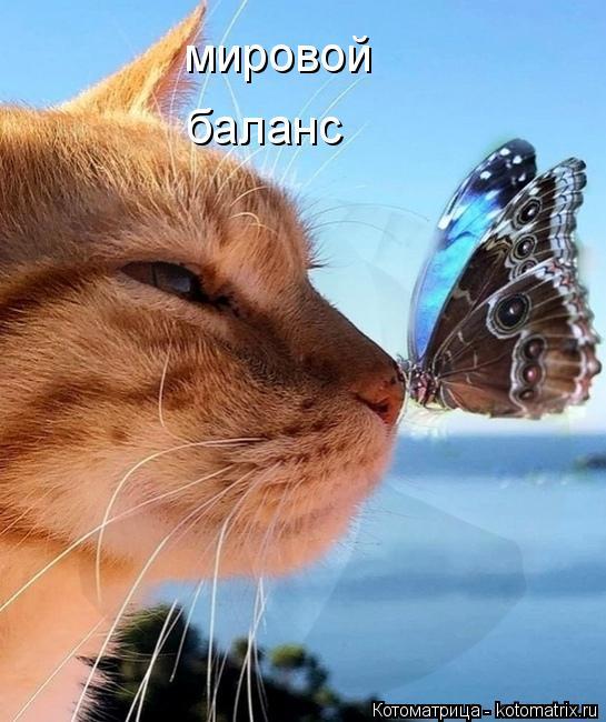 kotomatritsa_T (545x650, 229Kb)