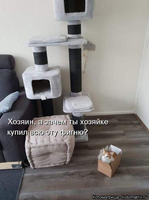 1561744769_kotomatrica-21 (500x674, 138Kb)