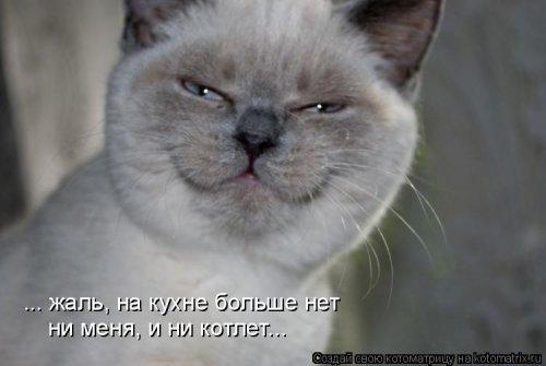 1561744785_kotomatrica-12 (500x335, 68Kb)