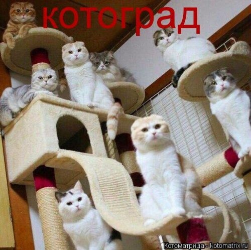 1561744804_kotomatrica-32 (500x498, 194Kb)