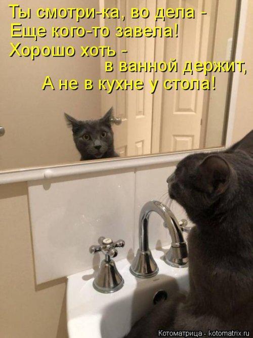 1561744832_kotomatrica-20 (500x668, 194Kb)