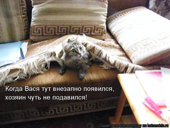 kotomatritsa__P (700x524, 361Kb)