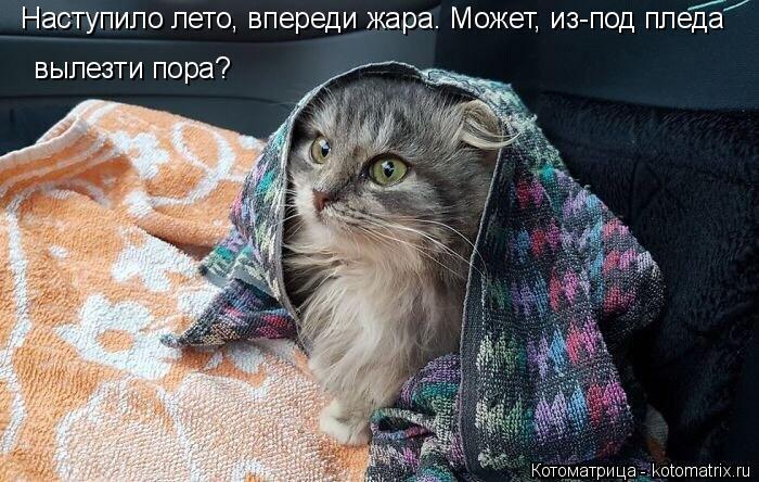 kotomatritsa_LX (700x444, 273Kb)