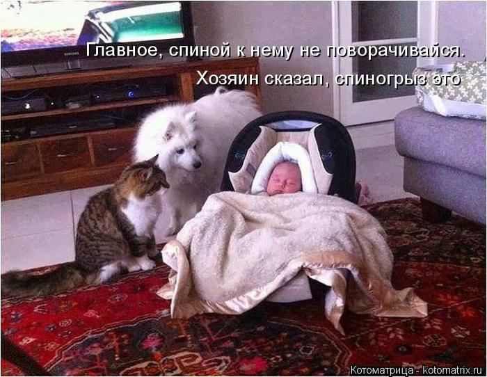 kotomatritsa_nq (700x542, 399Kb)