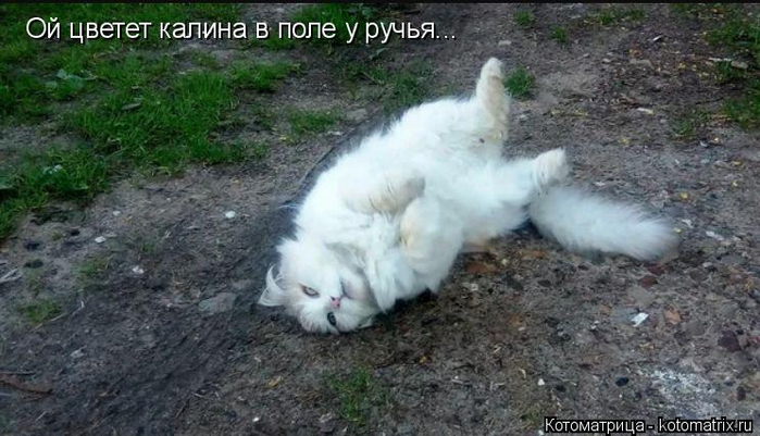 kotomatritsa_so (700x401, 292Kb)