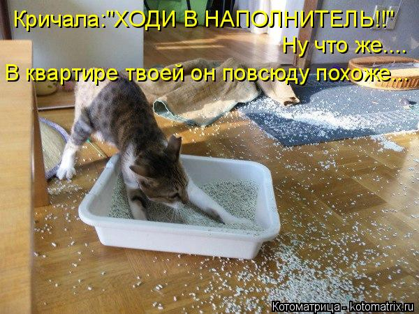 kotomatritsa_u (600x450, 285Kb)