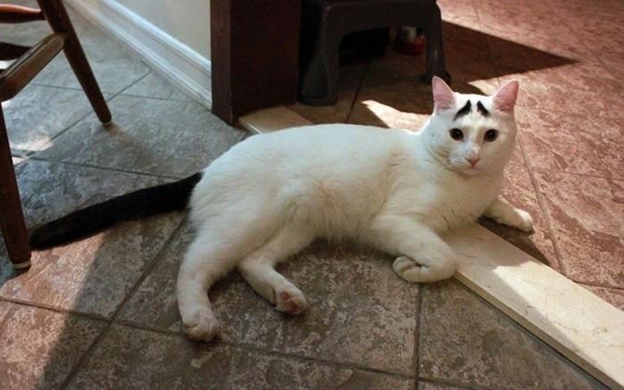 Фотографии кота с озабоченными бровями