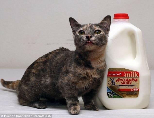 Самый маленький кот в мире   звезда Интернета