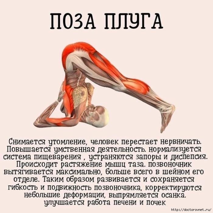 5239983_ioga_poza_plyga_1_ (700x700, 220Kb)