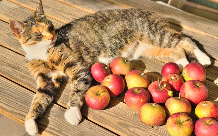 Cats_Apples_Wood_planks_553884_3840x2400 (700x437, 525Kb)