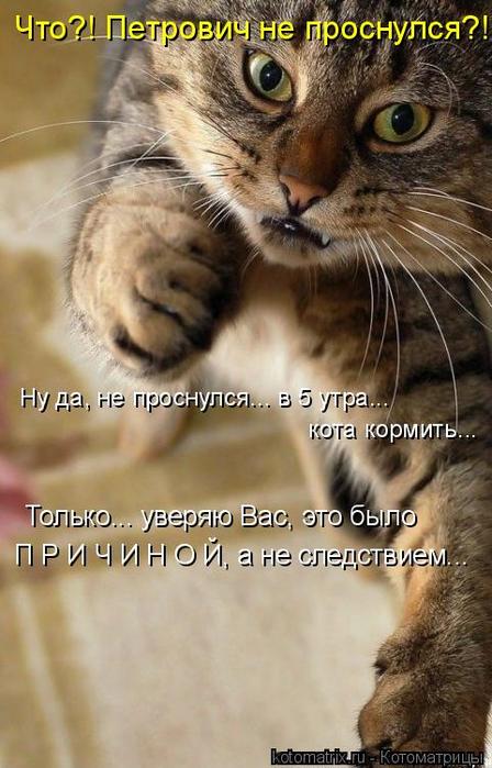 kotomatritsa_3 (448x700, 332Kb)