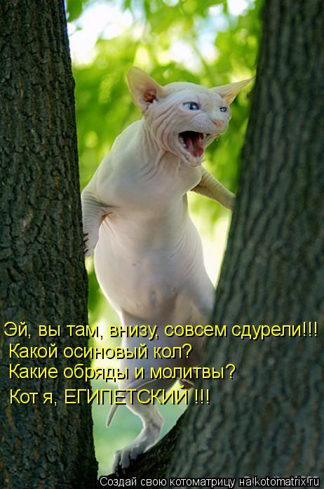 kotomatritsa_8D (462x696, 252Kb)