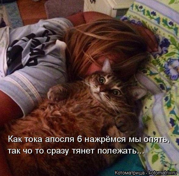 kotomatritsa_G (1) (587x579, 247Kb)