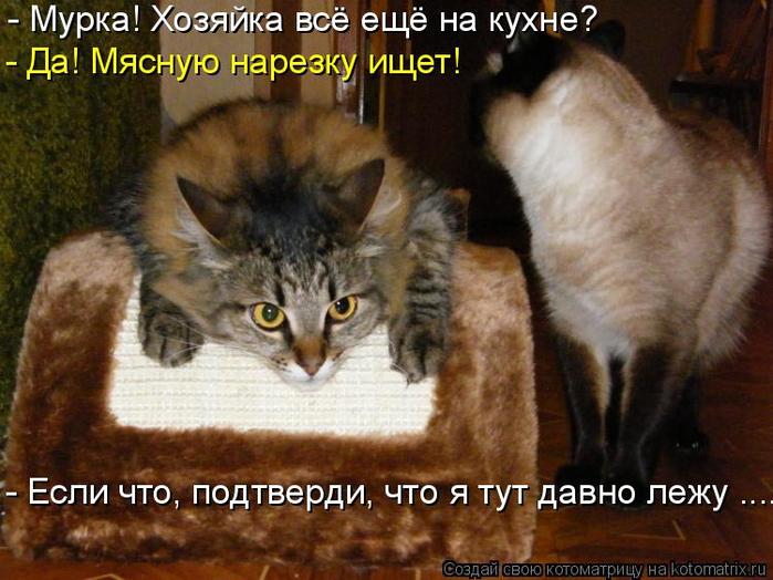 kotomatritsa_x (700x524, 395Kb)