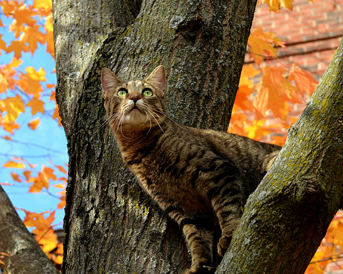 Cats_Branches_Trunk_tree_536901_1280x1024 (700x560, 599Kb)