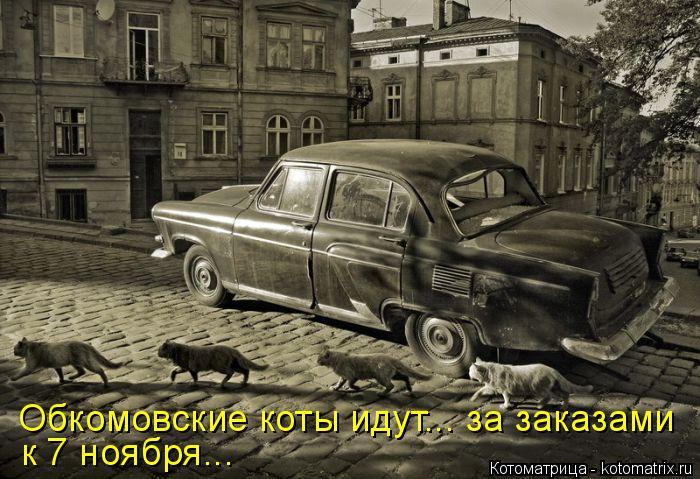kotomatritsa_CI (700x479, 272Kb)