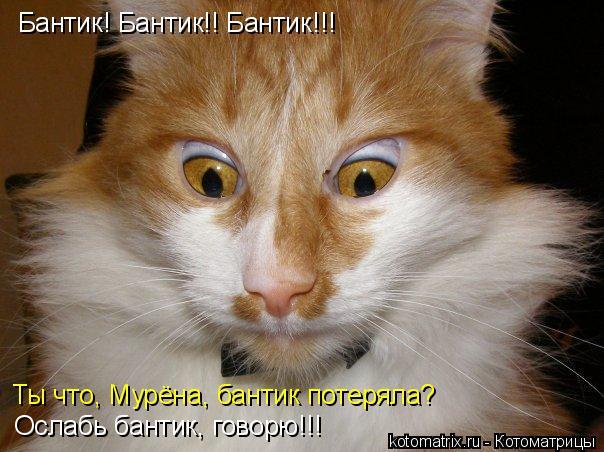 kotomatritsa_G (1) (604x452, 221Kb)