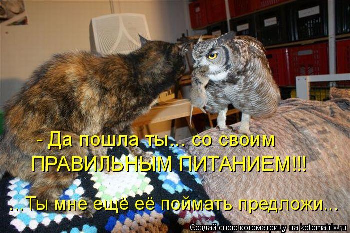 kotomatritsa_l (700x466, 327Kb)