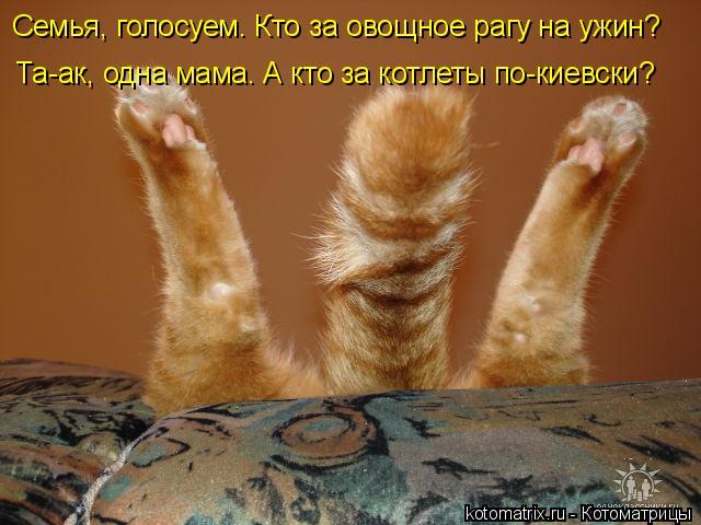 kotomatritsa_R (640x480, 221Kb)