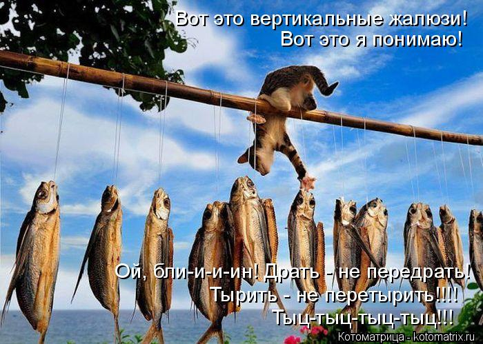 kotomatritsa_T (700x499, 368Kb)