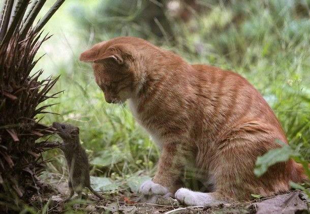 humor_cats_10 (610x421, 170Kb)