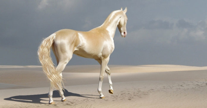 4897960_heavenlyhorse696x362 (696x362, 30Kb)