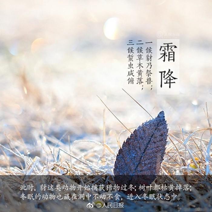 Китайский сезон Шуанцзян («Выпадение инея»)