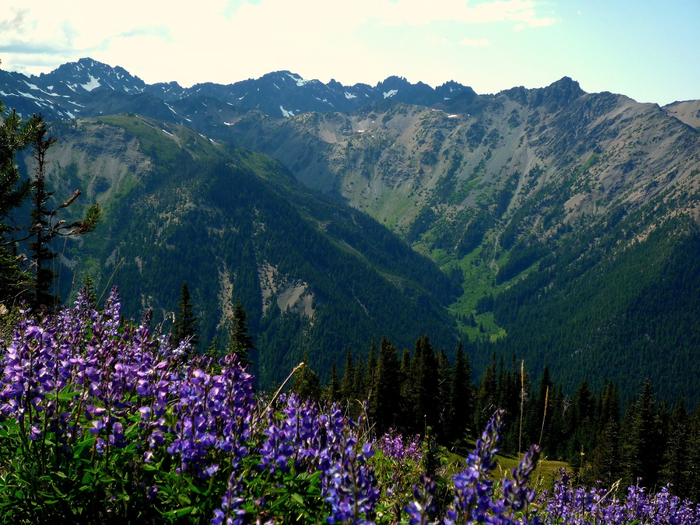 Marmot_Pass,_Olympic_National_Park (700x525, 511Kb)