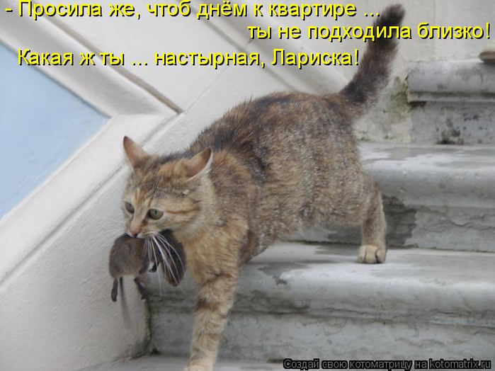 kotomatritsa_EQ (700x524, 307Kb)
