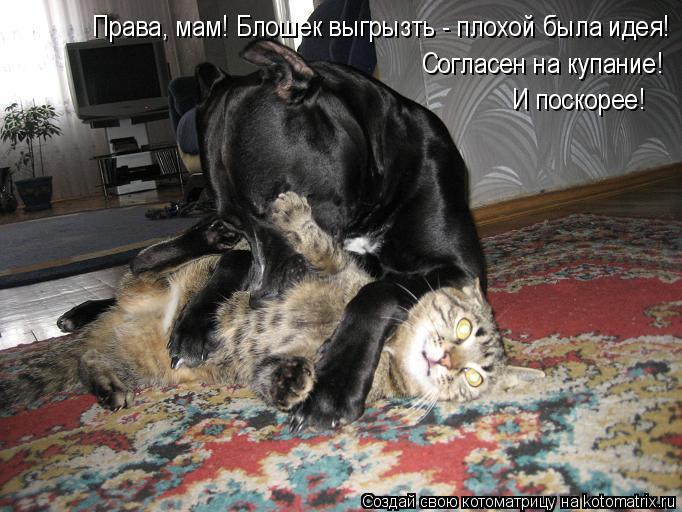 kotomatritsa_Ho (682x512, 240Kb)