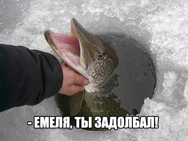 foto_prikol_rybalka_303 (640x480, 141Kb)
