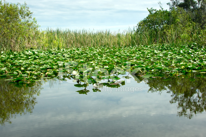 21759191-florida-everglades (662x440, 445Kb)
