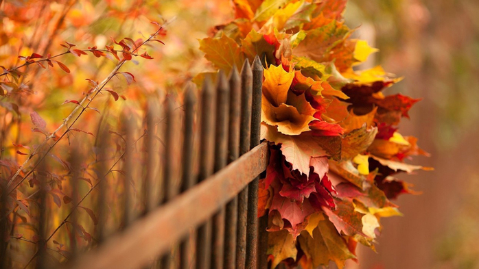 Nature___Seasons___Autumn_Bouquet_of_autumn_leaves_in_the_fence_100693_ (700x393, 314Kb)